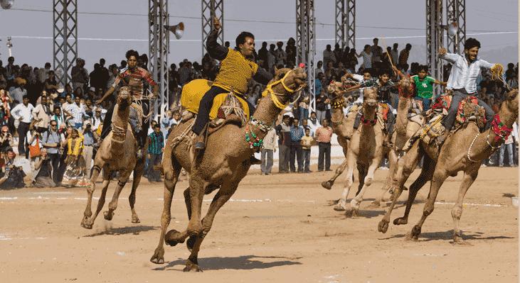 Camel Racing Dubia and Robot Jockeys