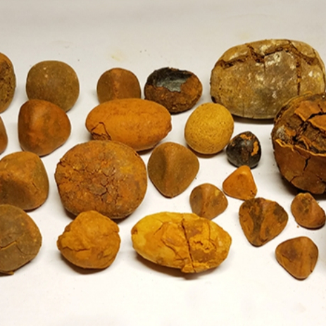 Buy cow ox cattle gallstones for sale
